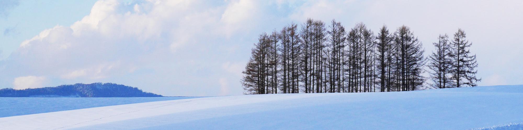 이 겨울, 일본 여행 꼭 가야 할 이유…고래·설원·온천
