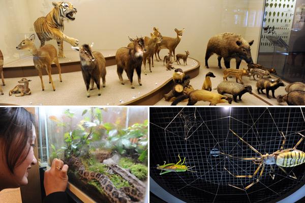 국립생물자원관에는 동식물 표본 6천 여점이 전시돼 있다.