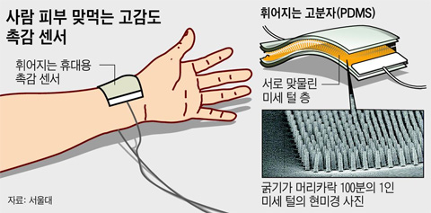 무당벌레 기어가는 느낌까지 감지… 인간 피부 맞먹는 촉감센서 개발