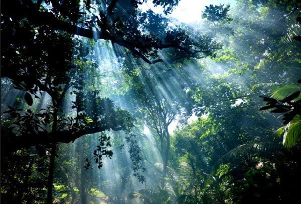 영화 '원령공주'의 배경이 있는 섬 '야쿠시마'
