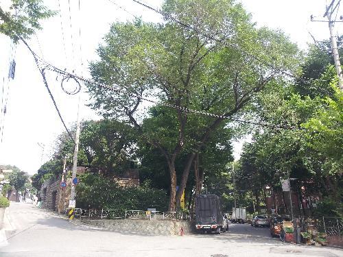 선농단 입구 서울대학교 사범대학터 표지석이 있는 느티나무. 오른쪽 길로 가면 선농단이다. 조용하고 품격 있는 마을 분위기가 인상적이다. 사진=선주성 시티스토리 편집장