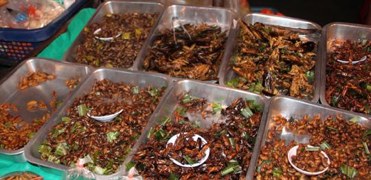 태국의 한 시장에서 파는 곤충 요리들. 나방 애벌레에서부터 물장군, 귀뚜라미 등 각종 곤충이 조리돼 팔리고 있다