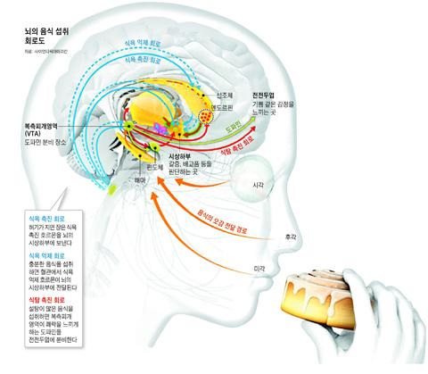 뇌의 음식 섭취 회로도