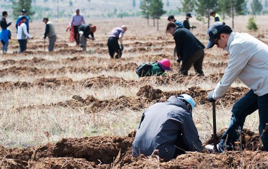 작년 5월 몽골 토진나르스 지역에서 동북아산림포럼 회원들과 후원 기업인 유한킴벌리 임직원, 몽골 현지 주민들이 함께 소나무를 심고 있다.