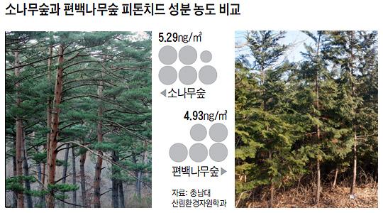 소나무숲과 편백나무숲 피톤치드 성분 농도 비교 그래픽