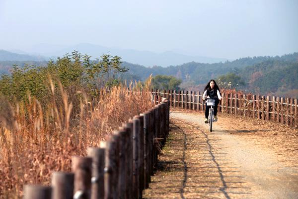 우포늪을 돌아보려면 걷는 것 보다 자전거를 이용하는 것이 좋다.