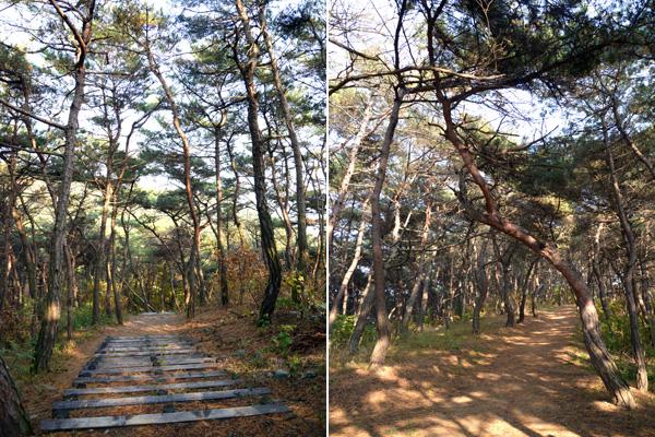 색다른 우포늪 탐방을 할 수 있는 숲탐방로의 모습.