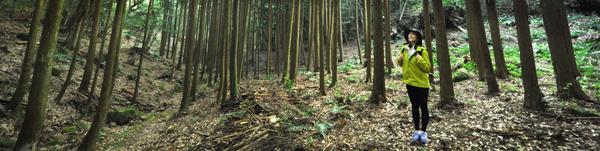 다케오 올레길의 삼나무 숲.