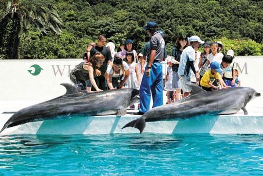 일본 와카야마(和歌山)현 다이지(太地)초의 고래 박물관을 찾은 방문객들이 돌고래를 만지고 있다.