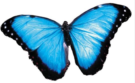 [Why] [달팽이 박사 생물학 이야기] 쓱 문지른 나비 날개선 無色 가루만… 여기엔 '나노의 비밀'이