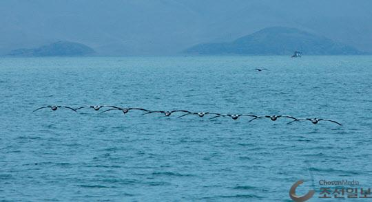 팔로미노 섬 가는 길에 줄지어 날아가는 펠리칸