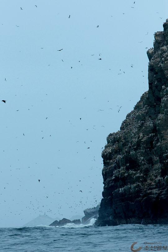 팔로미노 섬 여기저기에 하늘마저 새들로 가득 차 있다.