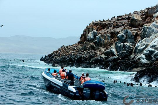 수많은 사람들이 보트를 타고 팔로미노 섬을 여행한다.