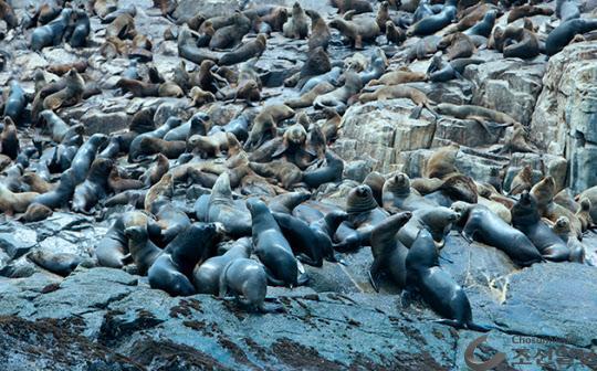 강치(물개, Sea Lion)는 몸길이 2.5m 내외 군집생활하며 일부다처제로. 수명은 약 20년. 캘리포니아, 독도 강치, 갈라파고스 강치, 페루 팔로미노 강치는 주로 태평양 연안에 서식한다.