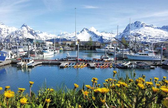 Alaska 빙하와 꽃… 겨울 인듯, 여름 인듯