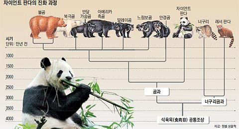 자이언트 판다의 진화 과정 그래픽