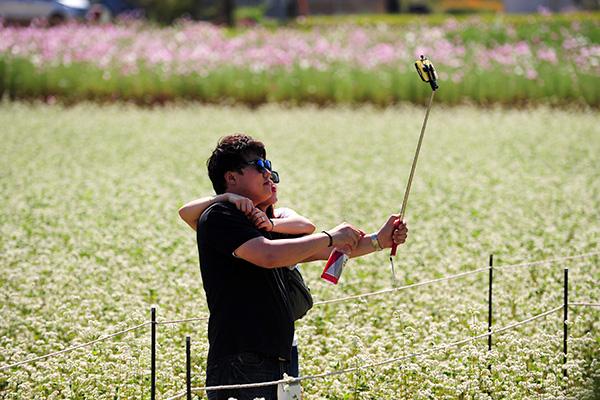 메밀꽃밭에서 연인이 사진을 찍고 있다.