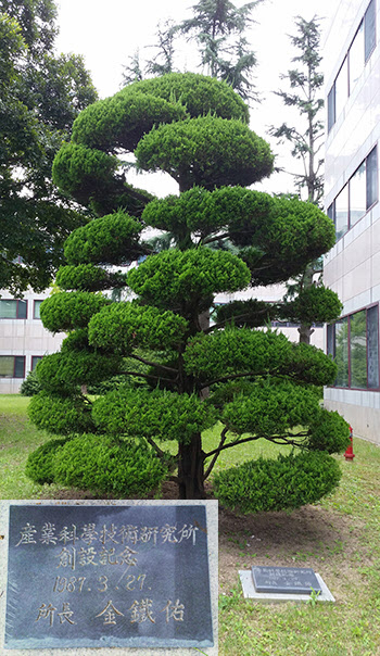 RIST 초대 원장으로 김철우 박사가 기념식수한 향나무와 표지석.