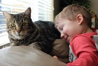 사람보다 유명한 고양이