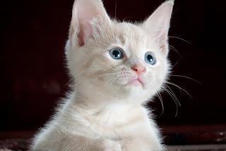 고양이에 대해 몰랐던 사실?!