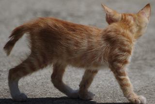 길고양이의 하루 (갤러리)