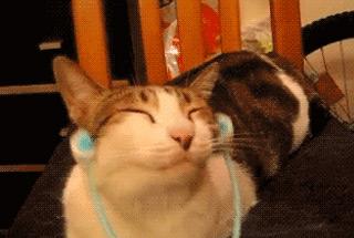 고양이 매력, 그것이 알고 싶다