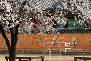 [갤러리] 궁궐의 사계
