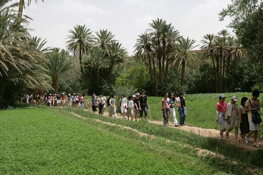 사하라 사막 내 오아시스를 걷는 모습