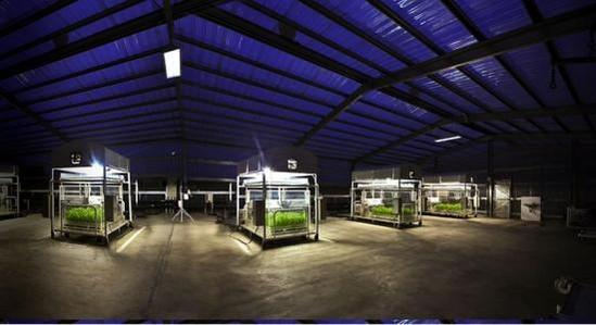 태양광 농업 /IRRI 홈페이지 캡처