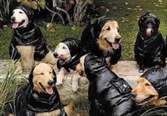 사진가 브루스 웨버가 촬영한 '몽클레르를 입은 강아지'.