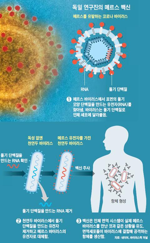 독일 연구진의 메르스 백신 설명 그래픽