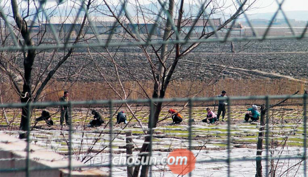 중국 단둥과 압록강을 사이에 두고 맞닿은 평북 신의주 인근 황금평에서 북한 주민들이 농사일을 하고 있다. 북한과 중국의 국경 통제가 강화되면서 국내에 입국하는 탈북자 수가 월평균 100명 이하로 줄었다.