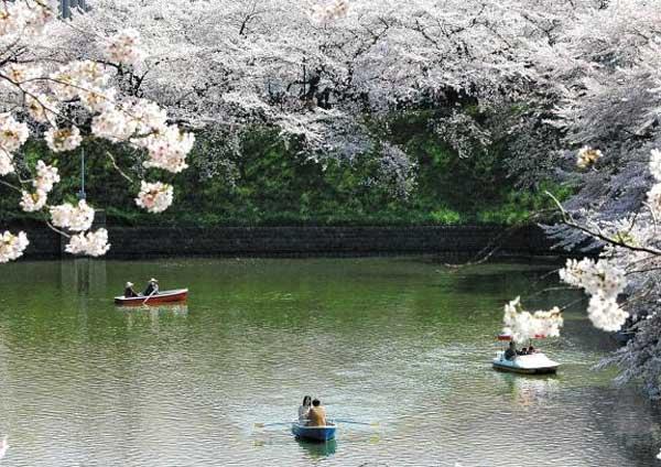 벚꽃이 흐드러지게 핀 일본의 한 호숫가.