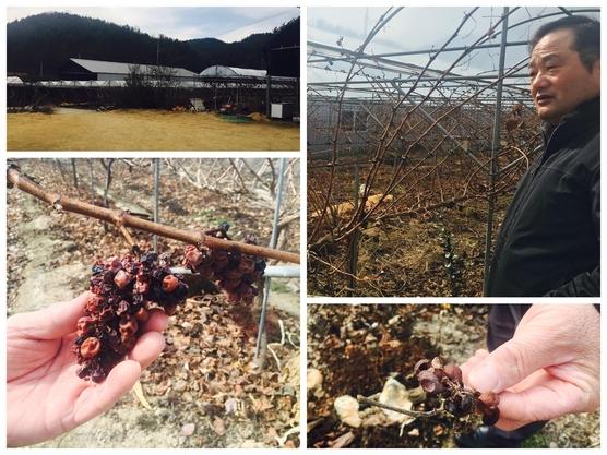 고도리와이너리는 최 대표가 직접 생산한 포도로 와인을 만들어낸다./변지희 기자