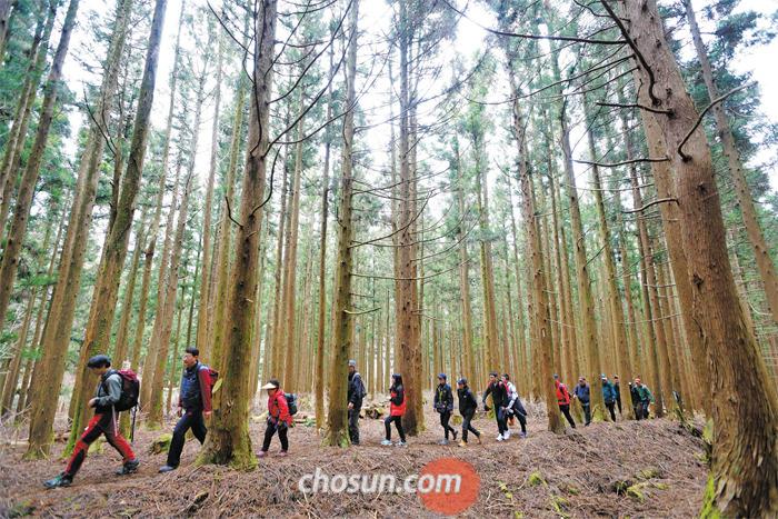 제주를 찾은 관광객들이 한라산 둘레길을 걷고 있다. 제주의 청정 숲길에선 육지와 다른 식물 분포를 비롯해 독특한 생태계를 경험할 수 있다.