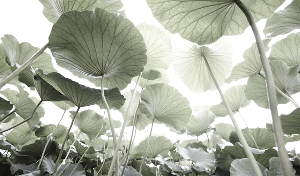 김용호의 사진 작품 중 가장 부드러운 '피안' 시리즈.