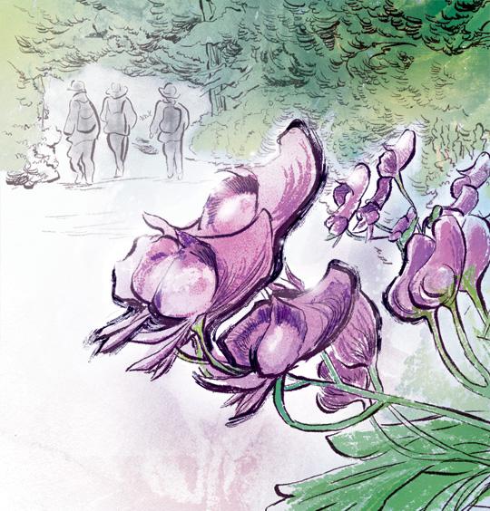 [김민철의 꽃이야기] 보랏빛 투구꽃은 식물계 毒性 챔피언