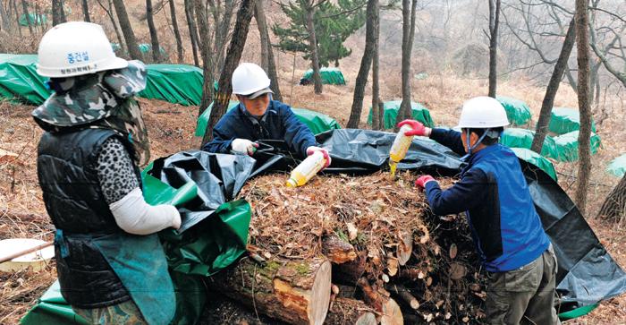소나무재선충병 정보, 재난관리시스템서 다 볼 수 있게 '정부 3.0' 실천
