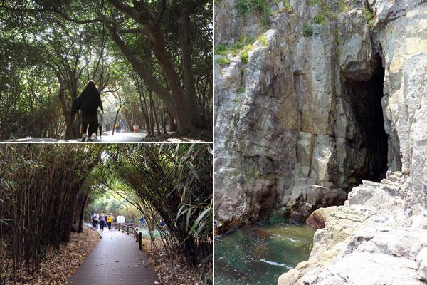 오동도에서는 동백나무 군락, 해식동굴 용굴 등 다양한 자연경관을 볼 수 있다.