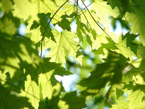 녹색이 자연친화적 의미를 갖게 된 것은 19세기 중반 부터다./픽사베이 제공