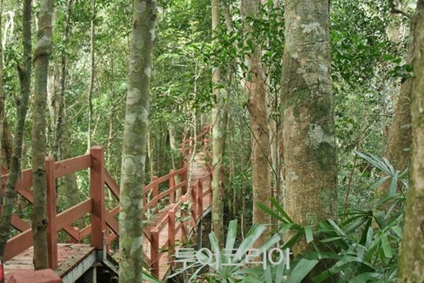 하이난에서는 열대 우림 투어 트레킹을 즐길 수 있다.