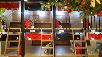 '놀숲' 서울대입구점의 소굴방 모습. 주말이면 소굴방을 차지하려는 대기 손님으로 북적인다./사진=조현정 인턴 기자