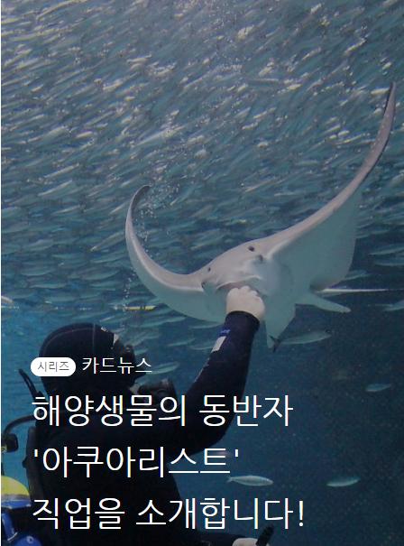 해양생물의 동반자 아쿠아리스트 직업을 소개합니다!