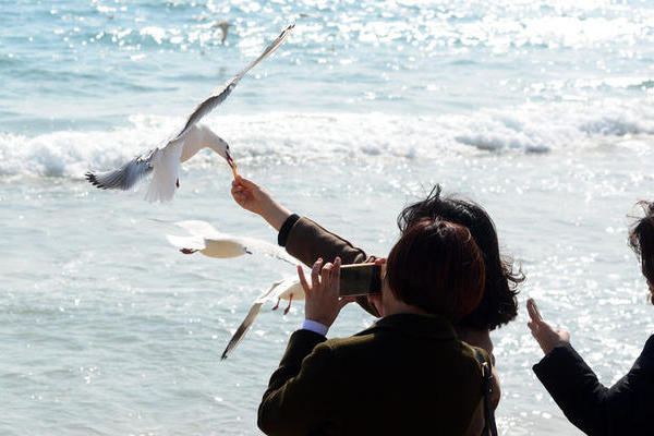 해운대해수욕장 갈매기 모이주기
