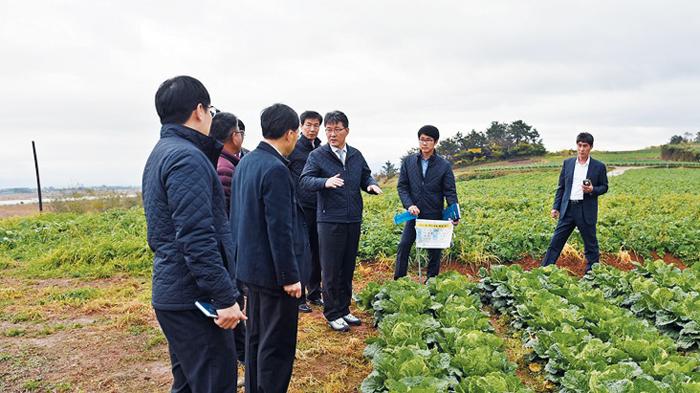여인홍 aT 사장 등이 지난해 11월 전남 해남 배추밭을 방문해 가을배추 작황을 점검하고 있다.