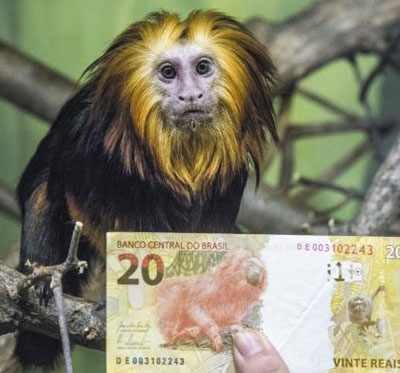 에버랜드가 16일 공개한 세계적 희귀종'황금머리사자 타마린'과 타마린이 들어간 브라질 지폐.
