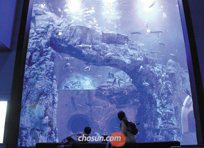 다누리 아쿠아리움에 있는 높이 8m, 너비 5m의 대형 수조 앞에서 방문객들이 물고기를 구경하고 있다.