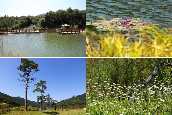데크로드를 걷다보면 다양한 식물과 멋진 풍경을 관람할 수 있다.