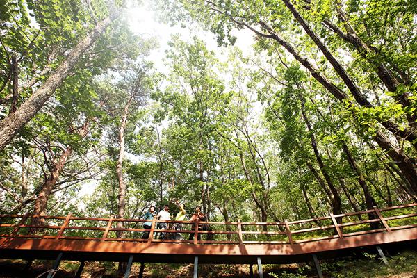숲속을 걸으며 산림 치유를 즐길 수 있는 다스림.