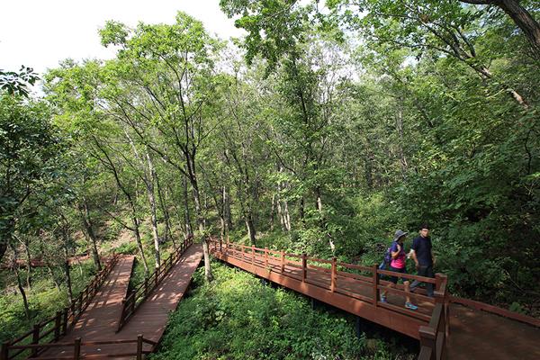 산림 치유를 위해 숲속을 걷고 있는 관광객의 모습.